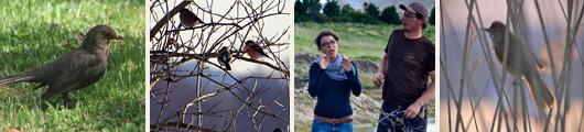 vogelwanderung