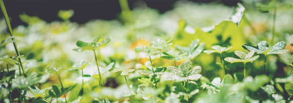 Wildpflanzen als Nahrung und Medizin