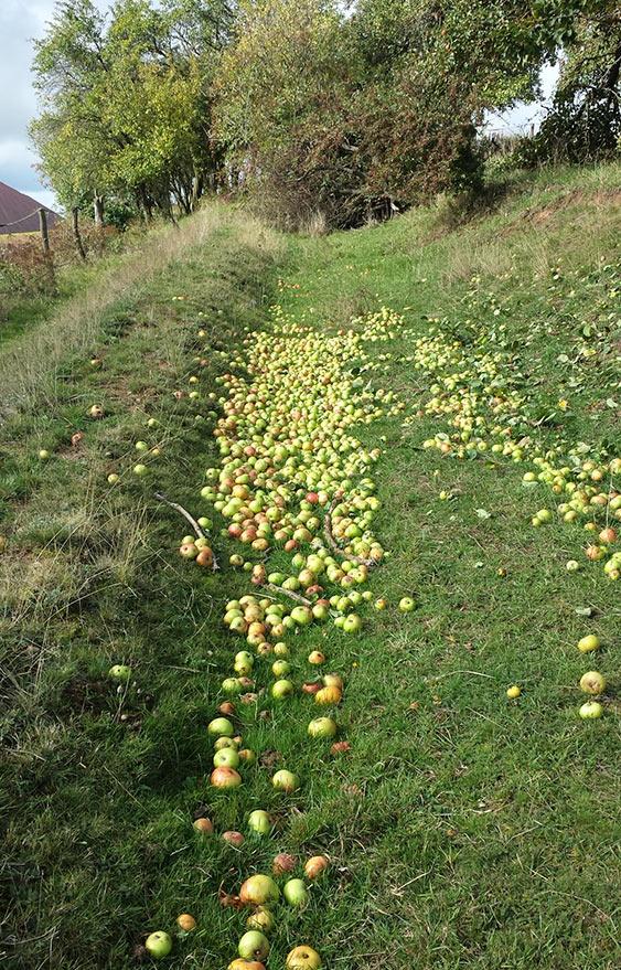 Apfelfuelle